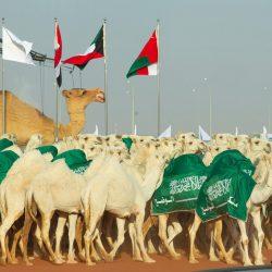 نشاطات النادي السعودي في جامعة دومينيكان